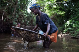 Sierra Leone after Taylor: A woman uses a net to catch fish in a pool of water near the city of Makeni