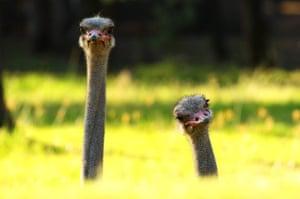 Week in wildlife: Behind The Scenes At Taronga Western Plains Zoo