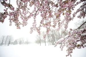 Week in wildlife: April Storm Dumps Snow Across Northeastern U.S.