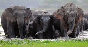 Week in wildlife: A herd of wild Asiatic elephants in the Deepor Beel Wildlife Sanctuary