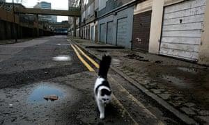 Cat walking through deserted Heygate estate, south London