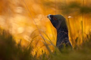 GDT: Nature Photographer of the Year 2012