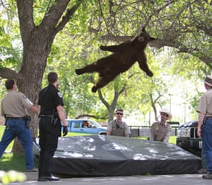 Picture Desk Live: A flying bear in Colarado