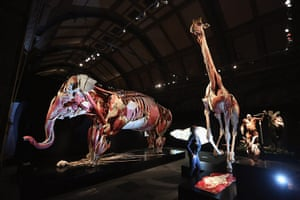 Animal Inside Out: A plastinated Asian elephant, gorilla and giraffe