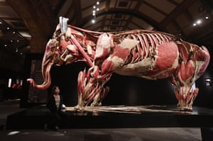 Animal Inside Out: A plastinated Asian elephant