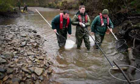 Fish rescue teams on the river Rye 3/4/12