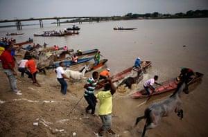 24 hours: San Fernando de Apure, Venezuela: Men and horses jump into the Apure River