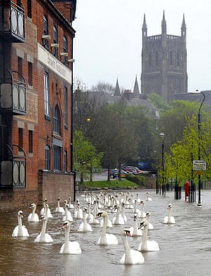 flooding in UK: Swans swim down a footpath in front of Worcester Cathedral