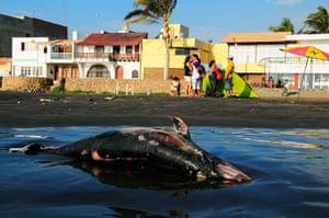 Week in Wildlife: A dead dolphin lies on Pimentel beach in Chiclayo