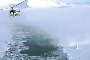 Biodiversity Monitoring: Tranquilising a polar bear from a helicopter, Svalbard, Norway