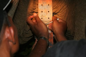 Biodiversity Monitoring: Satellite Collar for Elephant, Lampung, Indonesia