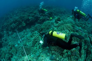 Biodiversity Monitoring: Regular monthly reef monitoring in Apo Reef Natural Park
