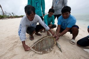 Biodiversity Monitoring:  rangers measure a green turtle in Tubbataha, Palawan, Philippines