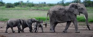 Week in Wildlife: KENYA-NATURE-ELEPHANT