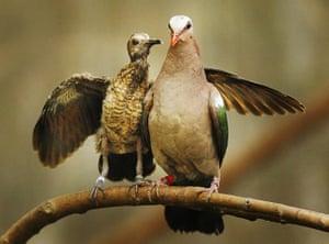 Week in Wildlife: Birds at Edinburgh Zoo