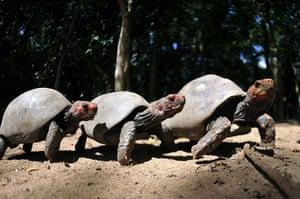 Week in Wildlife: turtles that were rescued from animal traffickers