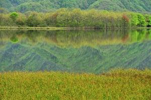 Week in Wildlife: China-hubei-shennongjia-dajiuhu Mountain Wetland-scenery