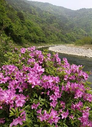 Week in Wildlife: Royal azalea flowers decorate valley