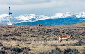 Week in Wildlife: As Natural Gas Fileds Grow, Pronghorn habitat shrink