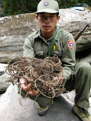 Saola: Patrol team with wire snares collected in saola habitat, central Laos