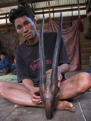 Saola: Villager and saola horns, Bolikhamxay Province, Laos