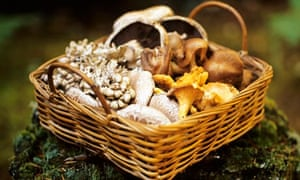 A basket of assorted wild mushrooms