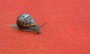 A snail is pictured on the red carpet at Cannes film picture desk