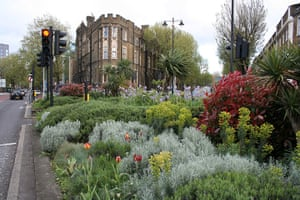 Chelsea Fringe: The guerilla gardening Lavender Fields