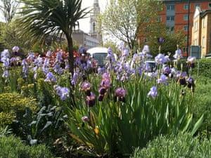 Chelsea Fringe: The guerrilla gardening Lavender Fields