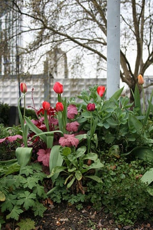 Chelsea Fringe: A guerrilla garden at Elephant and Castle in London