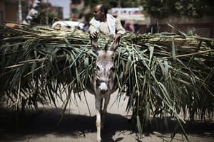 24 hours in pictures: An Egyptian farmer rides his donkey