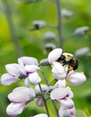 Week in wildlife: A bumble bee collects nectar during a spring day in New York