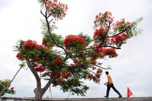 Week in wildlife: Red flamboyant season