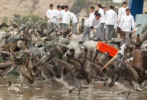 Week in wildlife: Local chefs and restaurant owners feed fish to pelicans