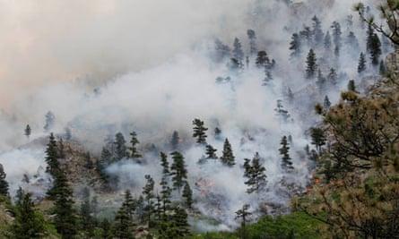 Hewlett Wildfire colorado