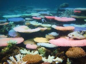 Ocean of Life : Coral reef