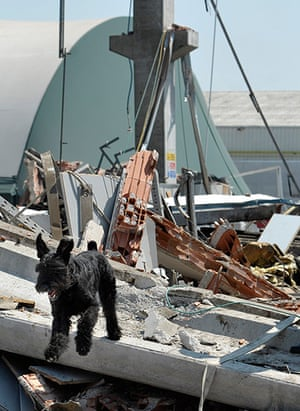 Italy earthquake: A dog walks amid the debris of a collapsed factory in Mirandola