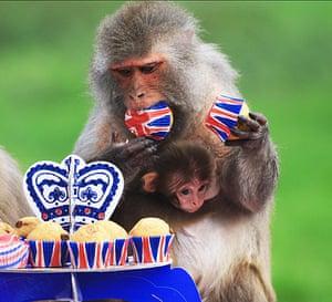 Monkey jubilee tea party: Monkey jubilee tea party