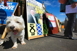 Local election update: Dog waits for owner to vote in Scottish elections