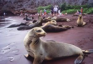 Places at risk: Puerto Egas, Santiago Island, Galapagos Islands, Ecuador.