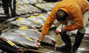 Fishmonger checks large bluefin tuna