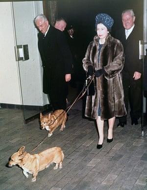 queen fashion: Queen an corgis