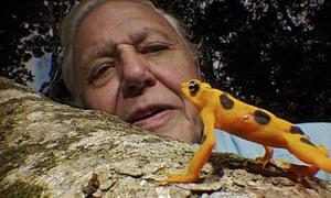 David Attenborough's 60-year career celebrated in BBC series