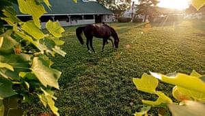 Kentucky Derby: Daddy Nose Best grazes after a morning workout