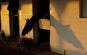Kentucky Derby: A horse is seen in it's stable
