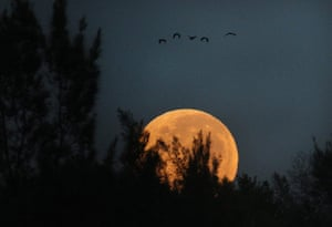 Supermoon: Early morning moon in Johannesburg, South Africa