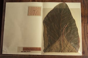 Pilgrimage: John Muir botanical specimen