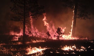 Wildfires in the US: A fire still raging in the Gila National Forest in New Mexico