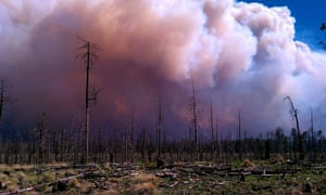 Wildfires in the US: smoke billowing from the site of wildfires at the Whitewater-Baldy Complex