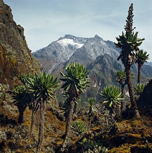 Rwenzori mountains: glaciers between Uganda and the Democratic Republic of the Congo